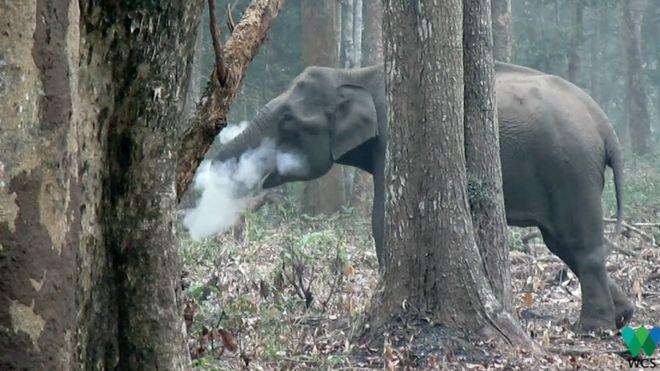 فیلی که 'دود می کند' کارشناسان را شگفت زده کرد
