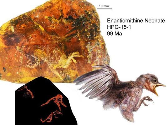 کشف فسیل ۹۹ میلیون ساله یک پرنده